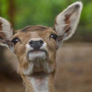 Animaux sauvages et autres