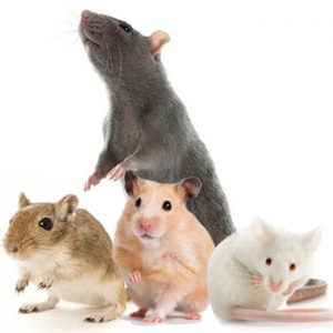 Rongeurs et petits animaux