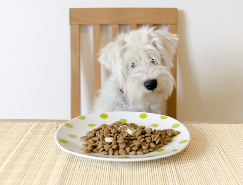 Le chien assis à la table se préparant à manger son repas de nourritures sèches