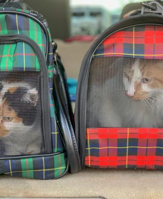 Cages et sacs de transport