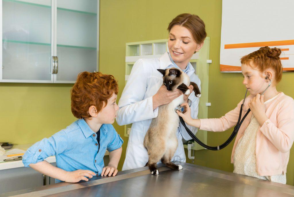 Le vétérinaire tenant le chat dans ses mains pendant que la jeune fille examine l'animal
