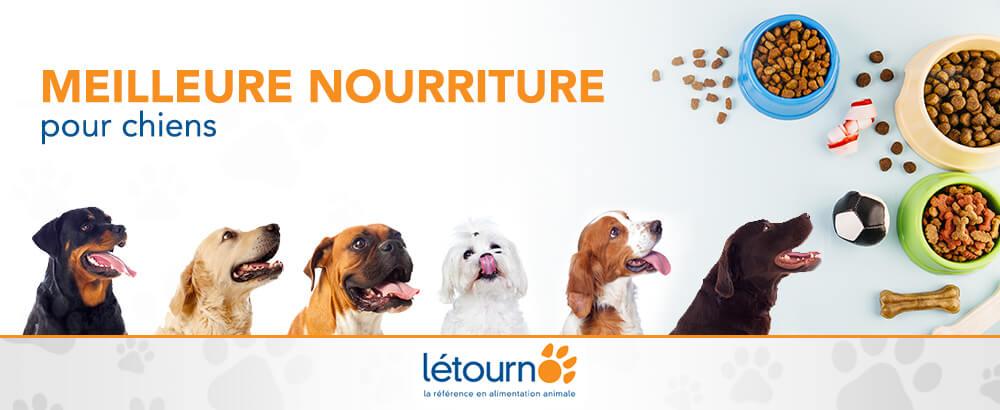 Six chiens tentés par la meilleure nourriture pour chiens chez Létourno
