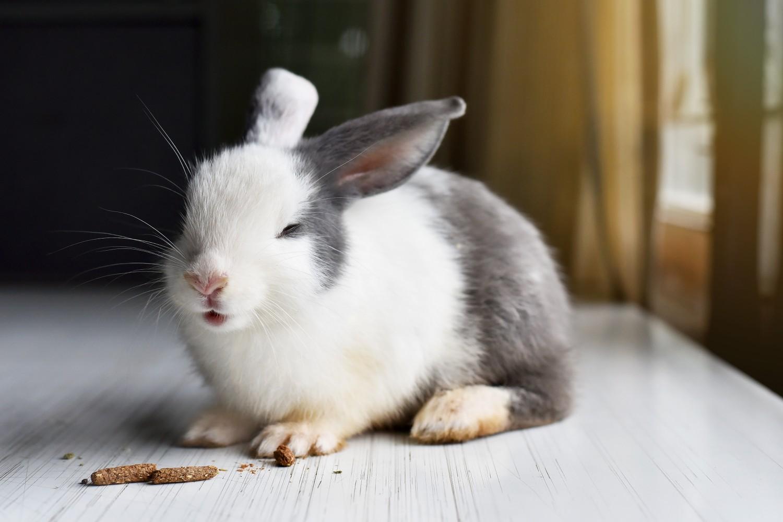Le lapin sur la table prêt à manger sa nourriture de qualité