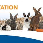 ALIMENTATION du lapin, douze lapins et lapereaux situés côtes-à-côtes