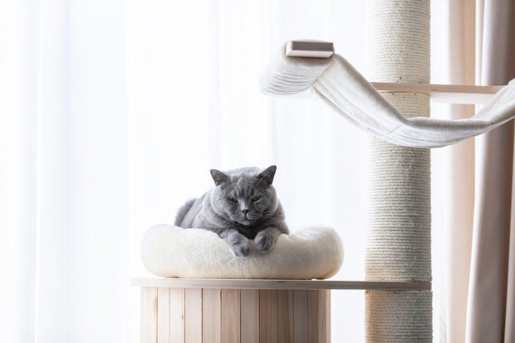 Un chat gris domestique couché sur son arbre à chat incluant le griffoir