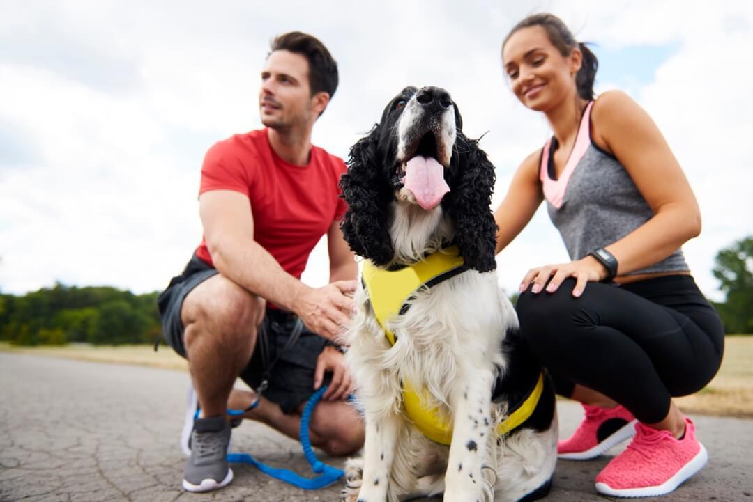 Un couple prenant une pause après avoir entrainé leur chien du Canicross
