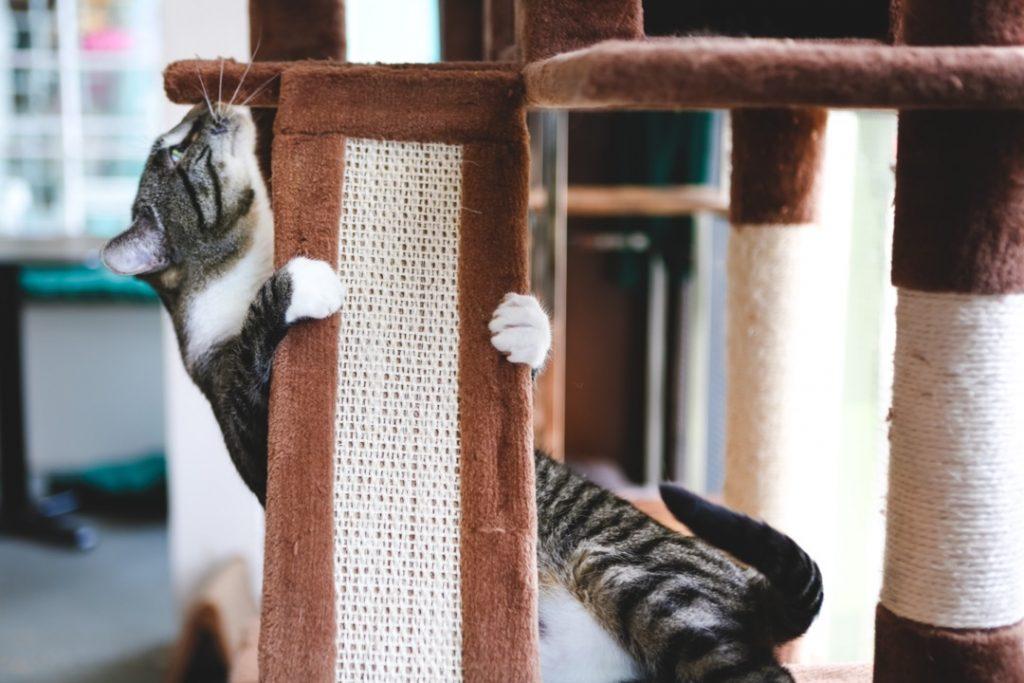 Un chat domestique grimpant sur son arbre avec ses griffes agrippées