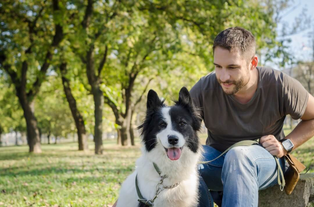 Maître félicitant son chien de son exercice de course situé dans un parc urbain, idéal pour le Canicross