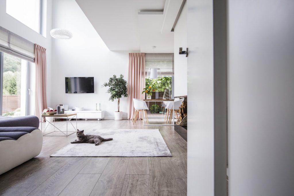 Un chat gris domestique sur le tapis à l'intérieur d'un salon spacieux sans arbre à chat