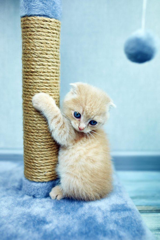 Un chaton faisant ses griffes sur son griffoir d'arbre à chat