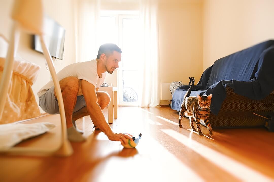 Homme essayant d'attirer l'attention de son chat pour jouer avec son jouet pour chat