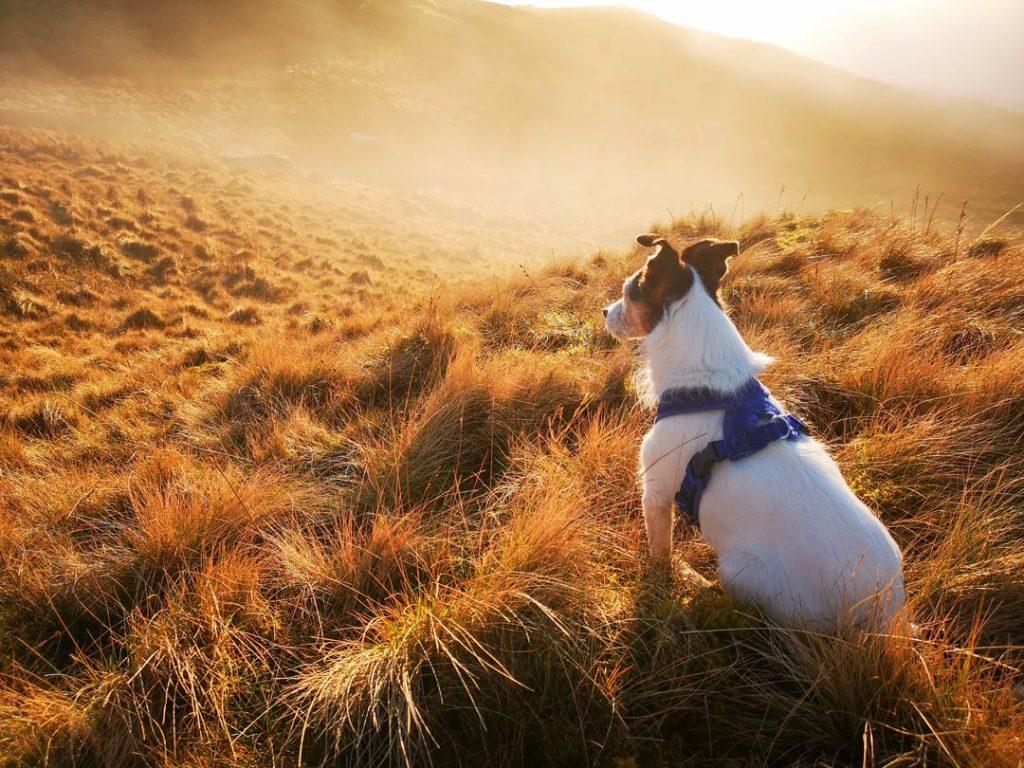 un chien assis dans une plaine