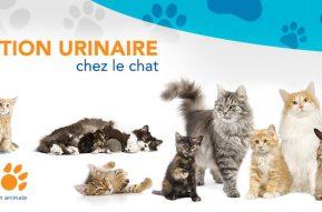 Tout sur L'INFECTION URINAIRE chez le chat chez Létourno